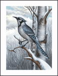 JD Lewis Wildlife Prints - blue jay