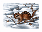 JD Lewis Wildlife Prints - Chipmunk
