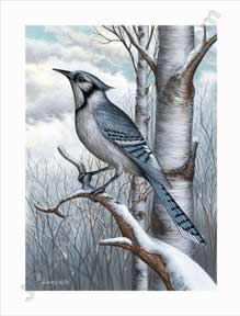 Blue Jay by J D Lewis