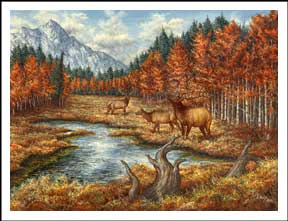 Northwest Autumn Elk