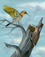JD Lewis Wildlife Prints - Treetop Flickers